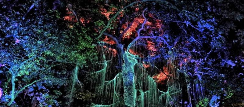 Penang Happenings | Wanderlust Penang: The Avatar's Secret